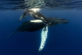 Humpback Mum and calf at the Silver Banks.