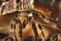Homestory - a look in the home of a hermit crab