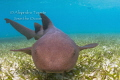 Nurse Shark encounter, San Pedro Belize