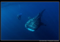 Whale Shark encounter... :O)..