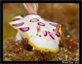 Pink spotted nudi...