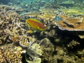 Beautiful fish and coral Great Barrier Reef, Cairns, Australia