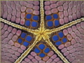 Symmetry -