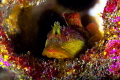 Who says Washington State diving is not colorful :-)