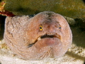 I need help identifying the type of moray eel captured in this photo take in Bonaire.
