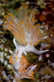 A little foreplay perhaps 