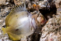 Big appetite of the mantis shrimp.