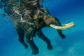 Well, Rajan again. As there is no category for swimming mammals I have put him into the