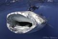 Whale shark incoming! Canon 7D. Tokina 10-17.