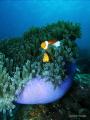 Nemo foto taken In Badi Island