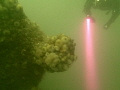 Another shot from recent dive trip to Scapa Flow on German WW1 wrecks. The torchlight highlights the gloomy green conditions prevalent.