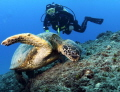Two for lunch! We found this huge green turtle eating and managed to sit down and watch for awhile!