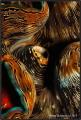 Tridacna maxima.