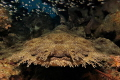 Face to face with a wobbegong - the flounder of the sharks :-)