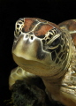 Turtle - Portrait