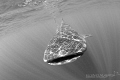 Whaleshark in Isla Mujeres, seemed to be carried by rays of light