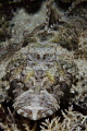 Laying Low - Crocodile Fish