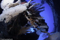 gorgones cirque des aigrettes
