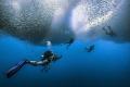 divers under the rolling sardine strom