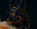 Beautiful Nudi