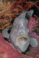 Giat Frogfish taken on Cannibal rock