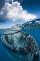 Whaleshark Over/Under
