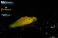 D U A L 