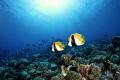 Fakarava coralreef