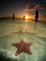 Sunset silhouettes... Starfish point, Grand Cayman