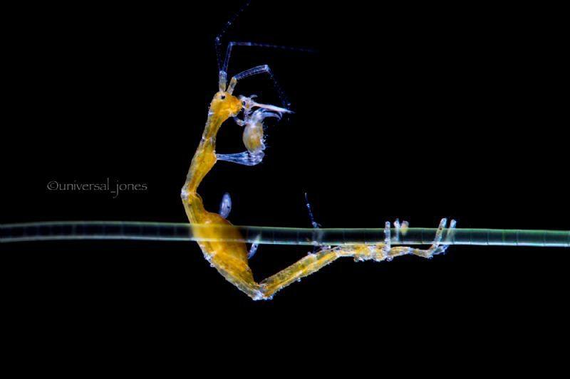 Weekly Underwater Hot Shot – Week 49 by wayne jones