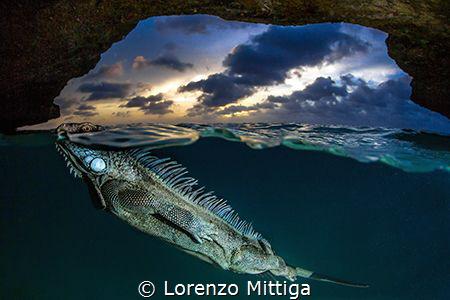 Weekly Underwater Hot Shot – Week 52 by lorenzo mittiga