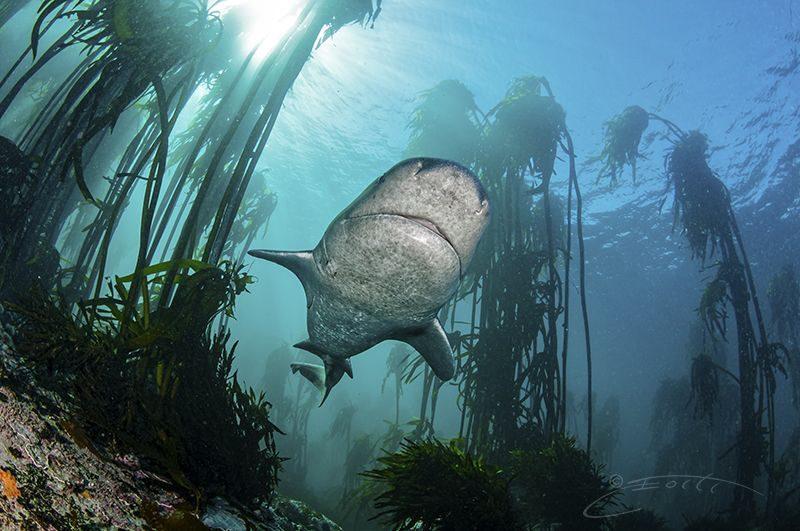 Weekly Underwater Hot Shot – Week 1 by Geo Cloete