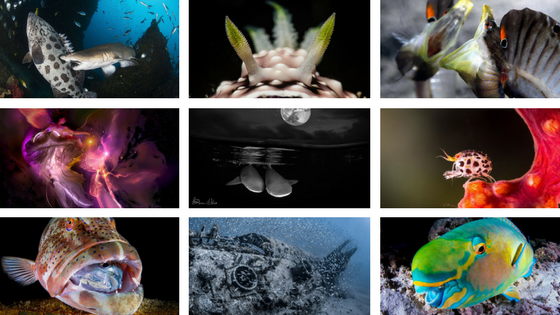 Annual Underwaterphotography Contest Winners 2016 in the Press