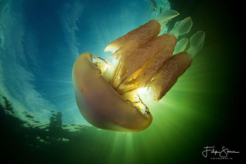 Weekly Underwater Hot Shot – Week 25 by Filip Staes