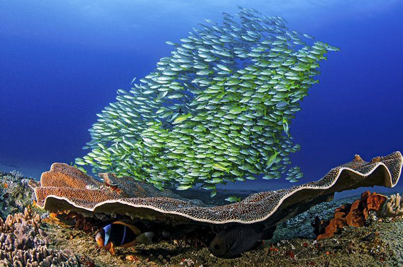 Weekly Underwater Hot Shot – Week 26 by Geo Cloete