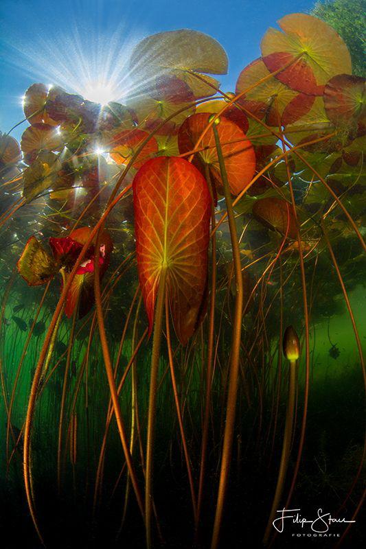 Weekly Underwater Hot Shot – Week 27 by Filip Staes