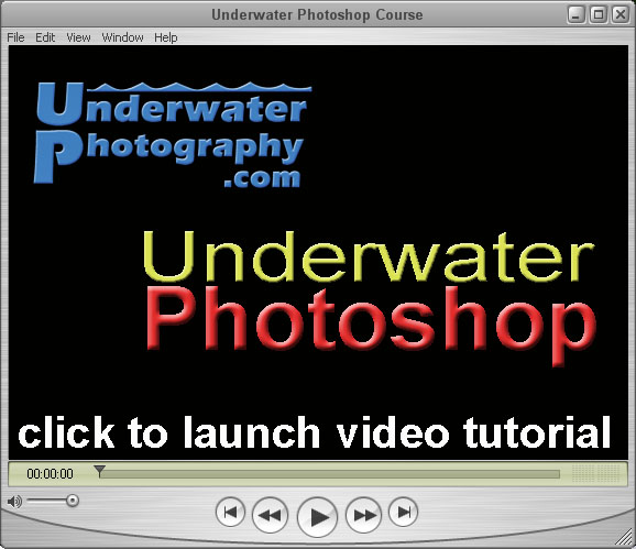 click to learn how to load and run the Photoshop action that removes backscatter from your u/w images.